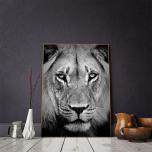 Poster Lejon Porträtt