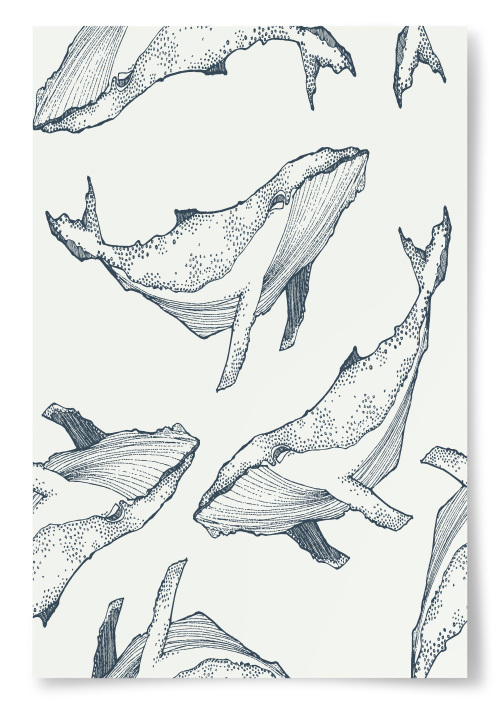 Poster Knölvalar tecknade