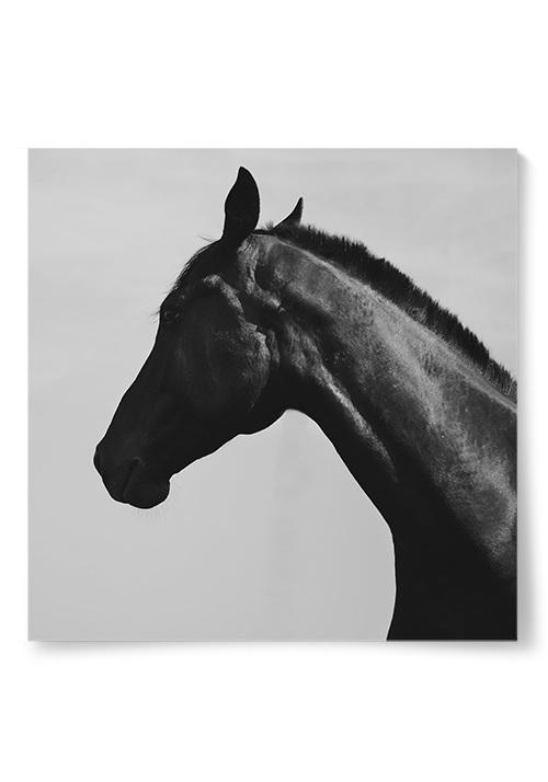 Poster häst fotokonst