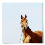 Poster häst foto