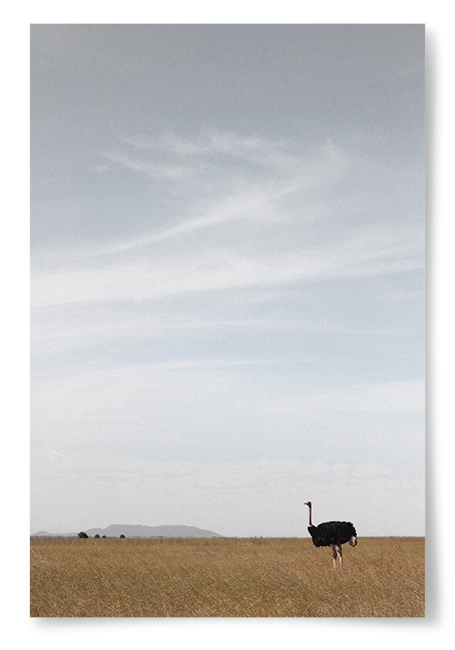 Poster Struts