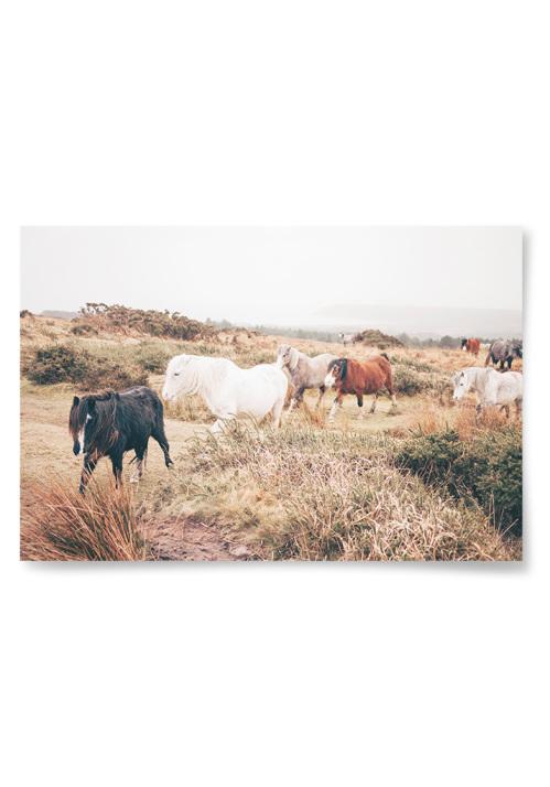 Poster Hästar på Promenad