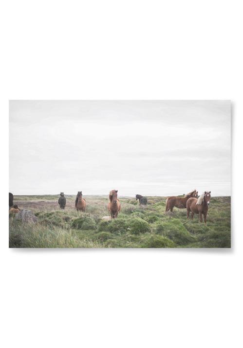 Poster Hästar