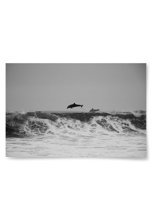 Poster Delfin Foto