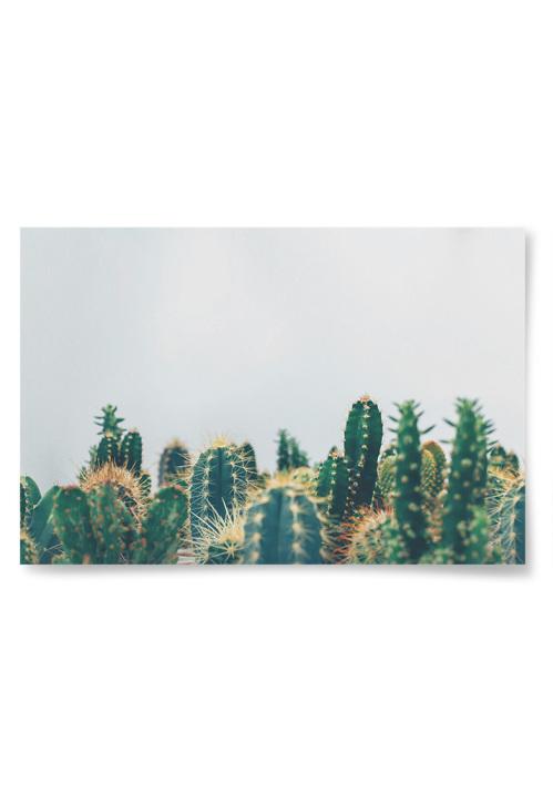 Poster Kaktusar
