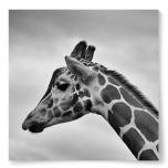 Poster Giraff