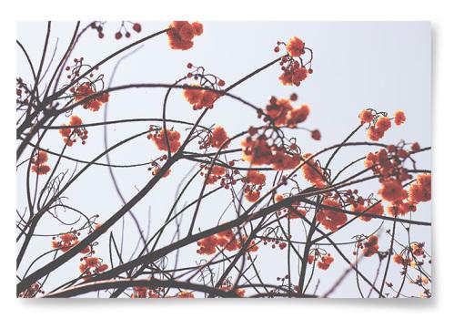 Poster Botanisk Höstkänsla