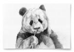 Poster Panda Teckning