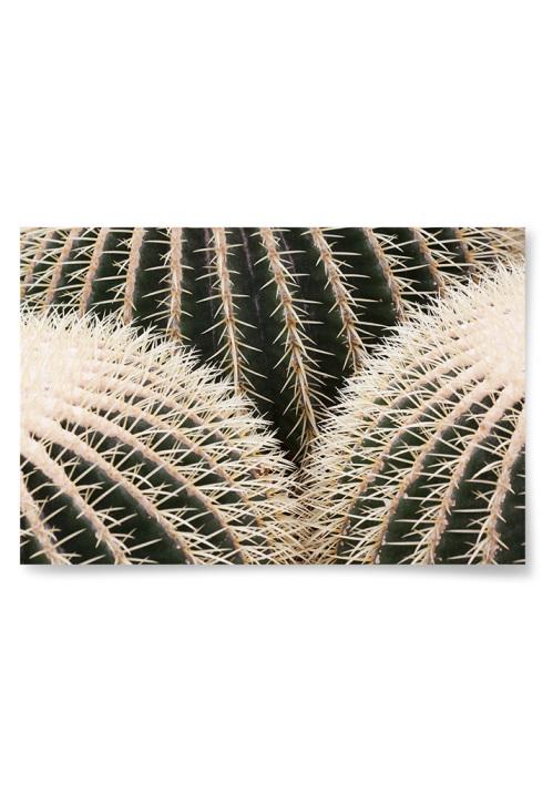 Poster Kaktus Närbild