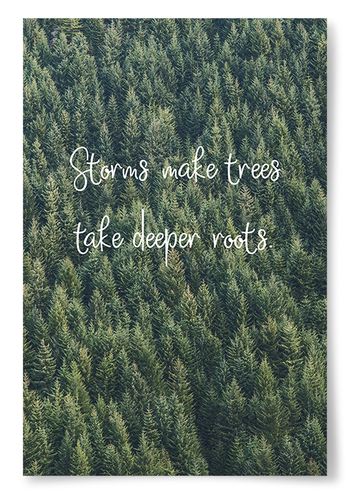 "Poster ""Storms Make Trees Take Deeper Roots"""