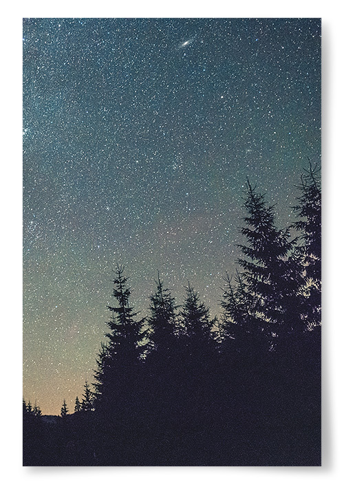 Poster Stjärnor Över Skogen
