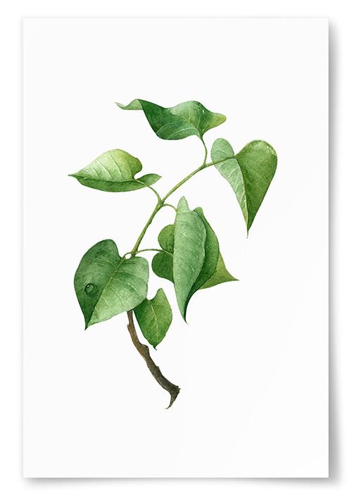 Poster Grön Kvist