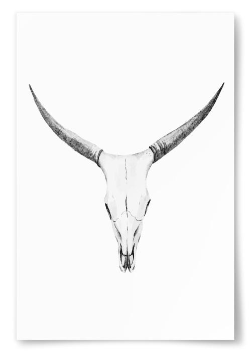 Poster Buffel Skull Teckning