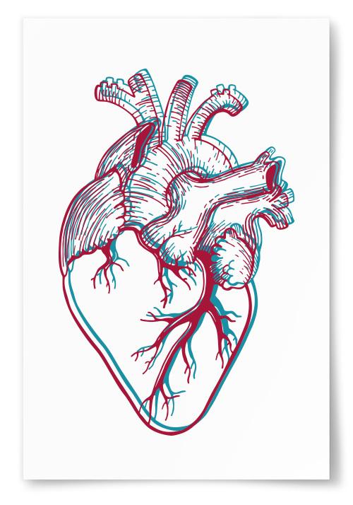 Poster Anatomiskt Hjärta
