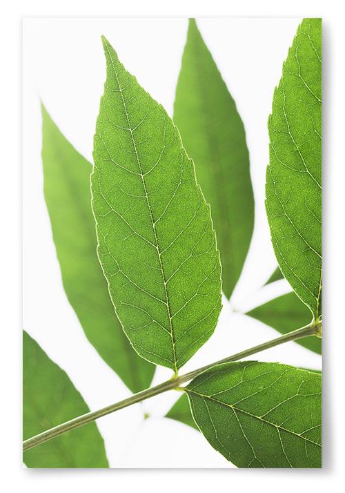 Poster Gröna Löv