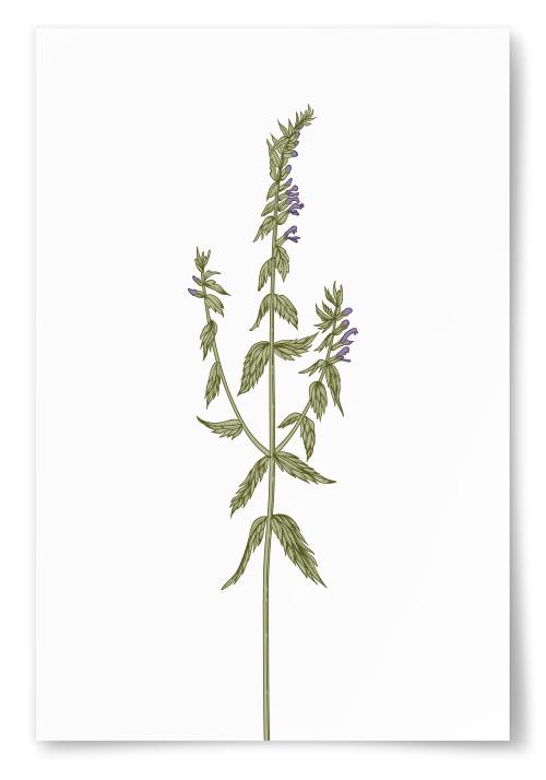 Poster Slank Växt