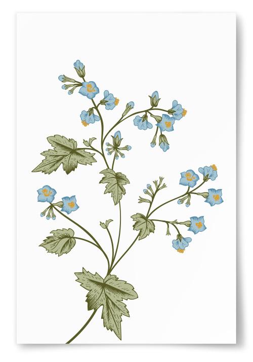 Poster Somriga Blommor