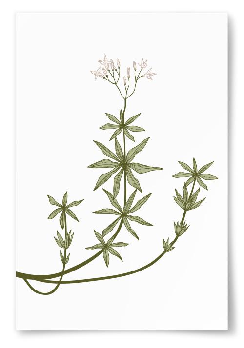 Poster Fin Växt