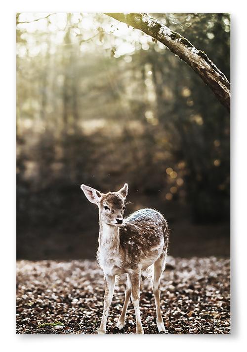Poster Rådjur