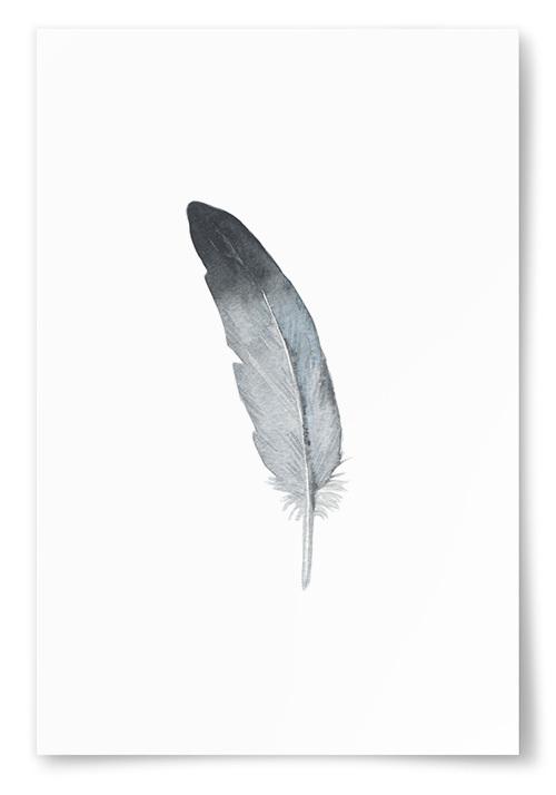 Poster Fjäder