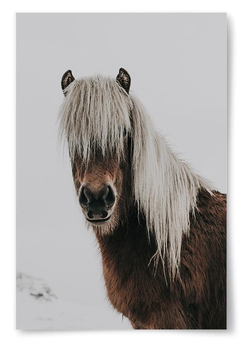 Poster Häst Porträtt
