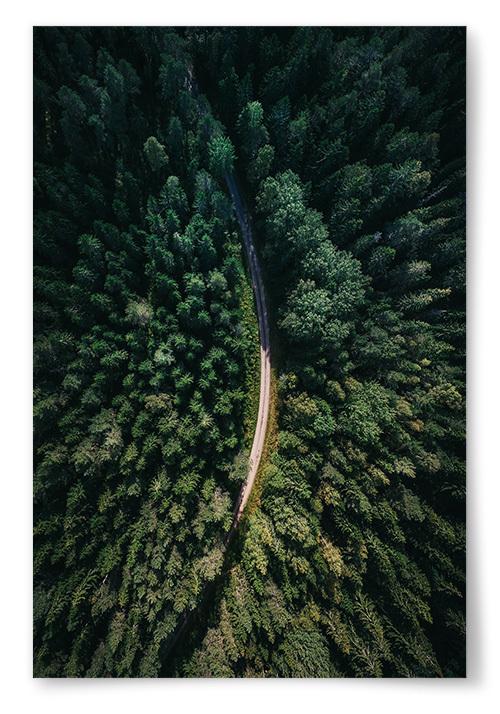 Poster Skogsväg