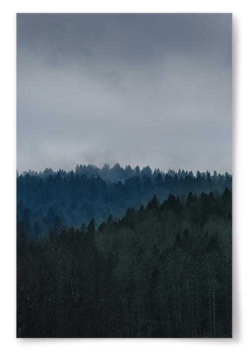 Poster Mörk Skog