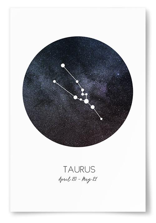 Poster Stjärntecken Oxen