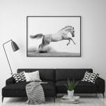 Poster Häst Vit