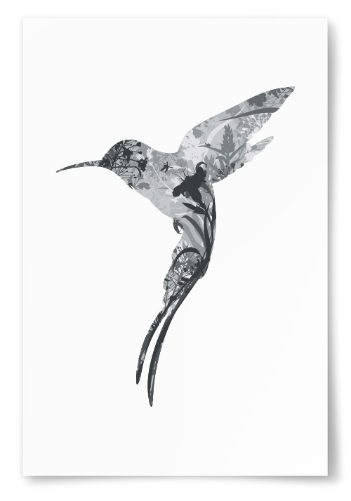 Poster Kolibri Silhuett
