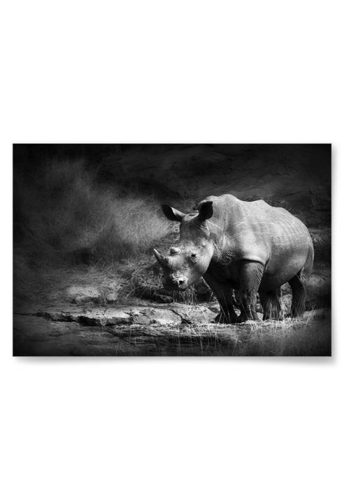 Poster Noshörning Horisontell