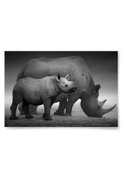 Poster Noshörningsunge