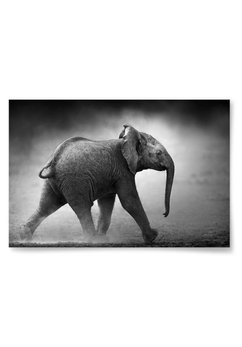 Poster Liten Elefant