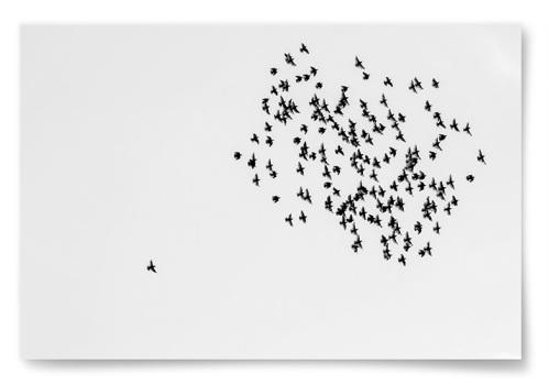 Poster Fåglar i Flock