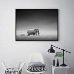 Poster Elefant och Zebra