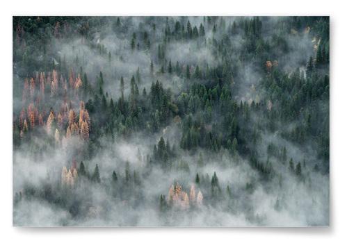 Poster Skog i Dimma
