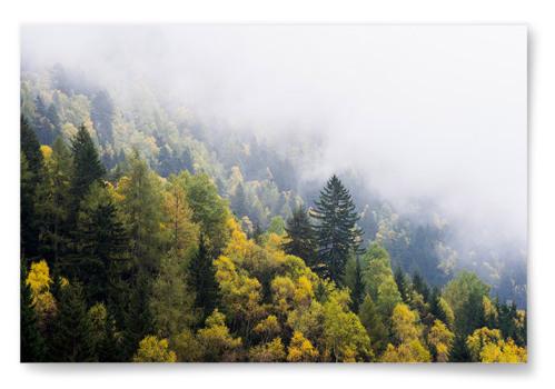 Poster Skog med Höstfärger Horisontell