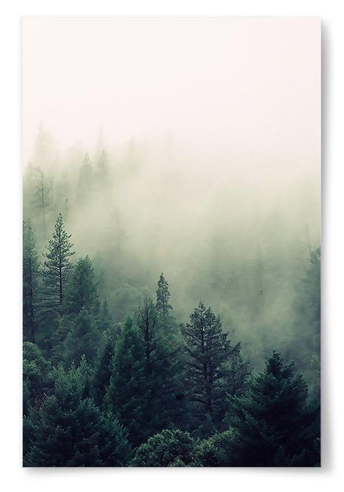Poster Dimmig Skog Vertikal