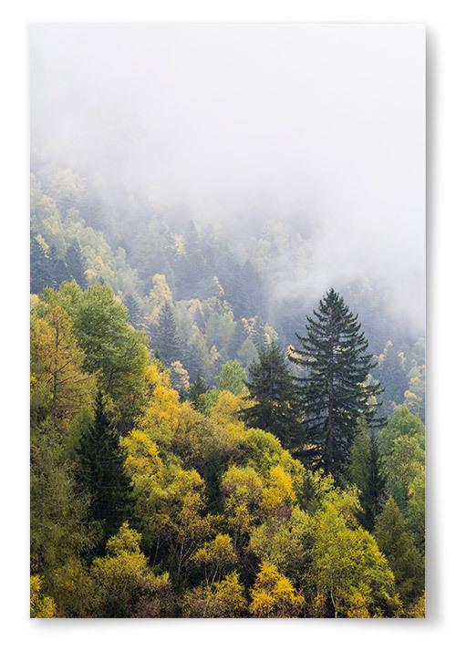 Poster Skog med Höstfärger