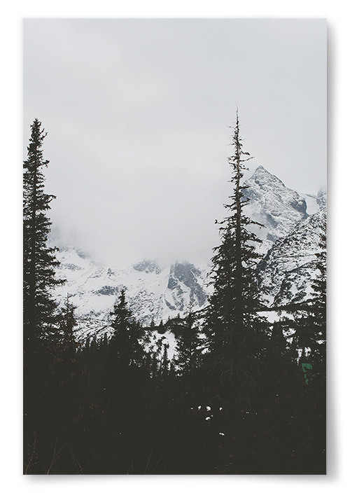 Poster Granar och Berg