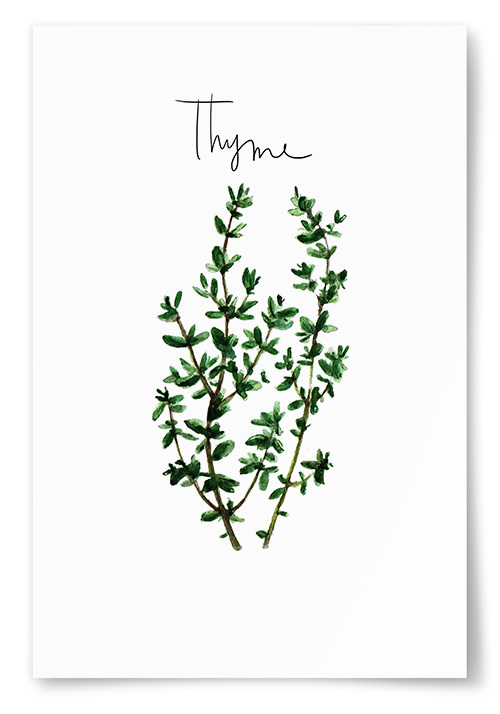 Poster Timjan