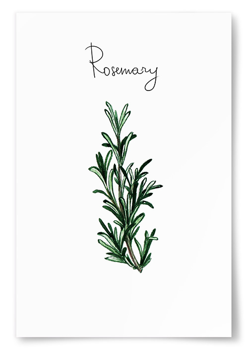 Poster Rosmarin