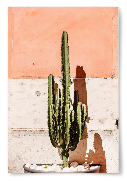 Poster Kaktus