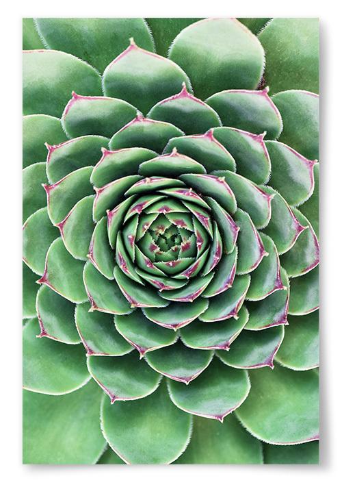 Poster Grön Bladväxt