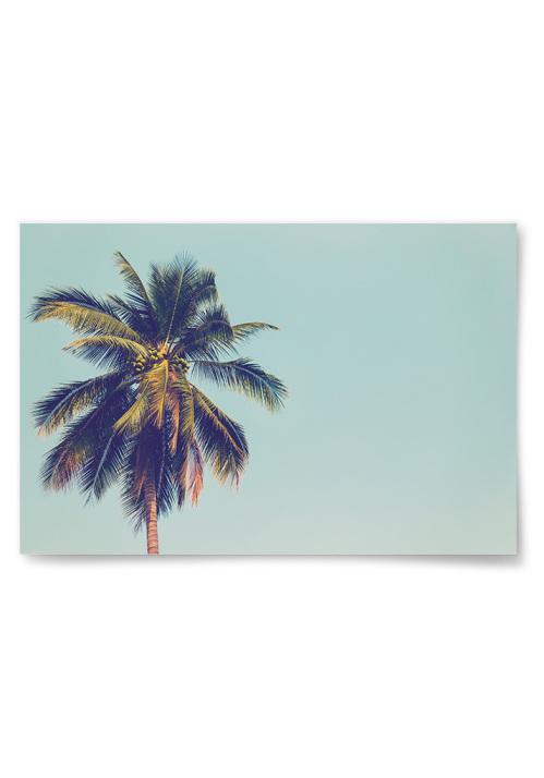 Poster Palm och Blå Himmel
