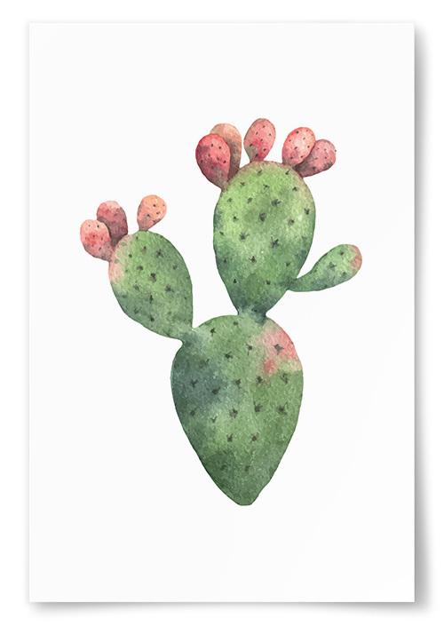 Poster Kaktus Akvarell No.2