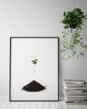 Poster Växt
