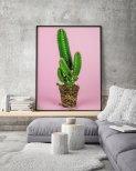 Poster Kaktus Rosa