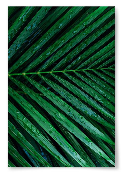 Poster Palmblad Regn