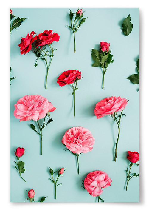 Poster Rosa Blommor